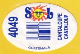 Fruits & Vegetables - Cantaloup, Guatemala (FL4049) - Fruits & Vegetables