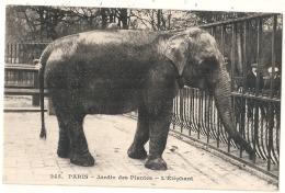 -75- PARIS  Le Jardin Des Plantes L'éléphant TTB  Neuve - Parks, Gardens