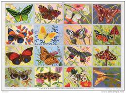 Papillons Paon Priam Lichenee Armandie Affiche Anatomique Arnaud Format 24x33 Cm état Superbe 1957 - Animaux