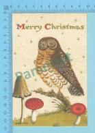 CPM - HIBOU - CHOUETTE - OWL - FROGMOUTH - NIGHTERJAR - OWLLET - 2 Scans - Oiseaux