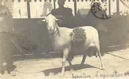 Exposition D´Agriculture 1914 Carte-Photo Brebis Décorée .devant Tour Eiffel - Exhibitions