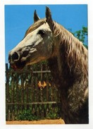 Horses, Cavalos, Pferde, Chevaux, Caballos, Cavalli  ( 2 Scans ) - Pferde