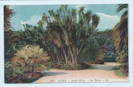 DC188 - Alger - Jardin D'Essai - Les Yuccas. LL 257 - Algerien