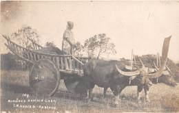 BURMA - MYANMAR / A Burmese Buffalo Cart - Photo Card - Myanmar (Burma)