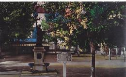 83 / SAINT CYR LA MADRAGUE / PLACE PORTALIS - Saint-Cyr-sur-Mer