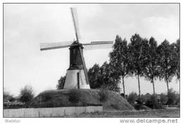 LONDERZEEL (Brab.) - Molen/moulin - Het Merelaantje, Overgebracht Uit Slijpe Bij Middelkerke In 1973. Mooi Zicht! - Londerzeel