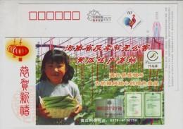 Vegetable Cucumber,CN 05 Henan Off-season Vegetable & Pollution-free Vegetable Planting Base Advert Pre-stamped Card - Legumbres