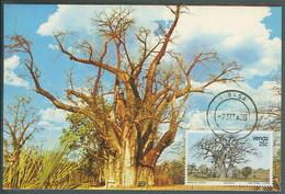 Venda Afrique Du Sud Arbre Baobab Carte Maximum Venda South Africa Adansonia Digitata Tree Maxicard - Venda