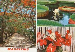 Ile Maurice         H22        Les Flamboyants Et Fleurs  ( 3 Vues ) - Mauritius