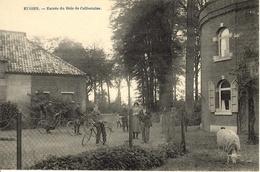 Eugies (Frameries). Entrée Du Bois De Colfontaine. Top Animation Avec Vélos Et Mouton. - Frameries