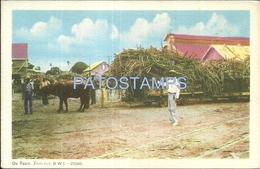 64109 CARIBBEAN TRINIDAD Y TOBAGO B.W.I BAY OX TEAM COSTUMES CART A COW POSTAL POSTCARD - Postcards