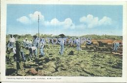64110 CARIBBEAN TRINIDAD Y TOBAGO B.W.I COSTUMES HANDLING ASPHALT LAKE POSTAL POSTCARD - Postcards
