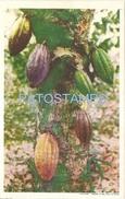64121 CARIBBEAN TRINIDAD Y TOBAGO B.W.I THE TREE POSTAL POSTCARD - Postcards