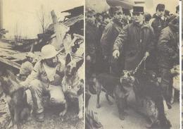 Earthquake In Armenia, 7.12.1988 - Canine Units - Armenia