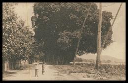 TIMOR -Gigantescos Gondões De Lecidere ( Bidau)( Ed. Da Missão)  Carte Postale - Timor Orientale