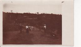 AK Foto - Dorfidylle - Ein Spaziergang - Rumänien 1914 (26422) - Rumänien
