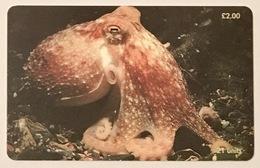 Lesser Or Curled Octupus