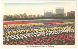 Uit De Bloemenvelden - Tulpen - Holland/Nederland (Weenink & Snel, Blv. 2) - 1931 - Zonder Classificatie