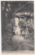 Nefta (Djerid) - Chemin De Sidi-Bou-Ali  -  (140 - ND Phot) - (Tunesie) - Tunesië