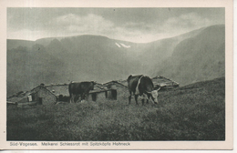CPA - SUD VOGESEN -MELKEREI SCHIESSROT MIT SPITZHOPTE HOHNECK - T. B. E. - VACHES - Autres Communes