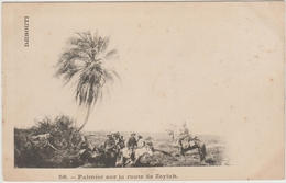 DJIBOUTI - PALMIER SUR LA ROUTE DE ZEYLAH - Djibouti