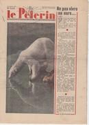 Revue LE PELERIN 16 Janvier 1949 Ours Polaire, Les Petites Boutiques, Trousseau Neuf ... - Bücher, Zeitschriften, Comics