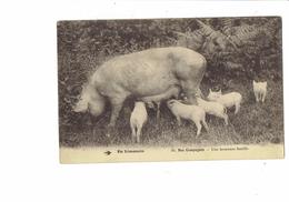 Cpa - En Limousin Nos Campagnes - Une Heureuse Famille - Cochons Truie Allaite Bébés Cochons - Cochons