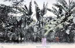 SINGAPUR - Banana Tree, Karte Um 1910 - Indonesien