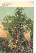 JERUSALEM . JARDIN DE GETHSEMANE . CARTE COLORISEE DATEE AU VERSO28.8.1919 - Israel