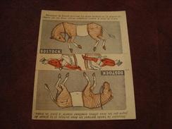 Image Publicité BOSTOCK HIPPODROME - Geïllustreerde Kaarten