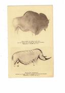 24 - Les Eyzies - Grotte De Font De Gaume - Rhinocéros / Bison  - - Rhinocéros