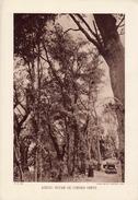 AZROU: FUTAIE DE CHÊNES-VERTS, MAROC, Planche Densité = 200g, Format: 20 X 29 Cm, (Service Forestier Maroc) - Documents Historiques