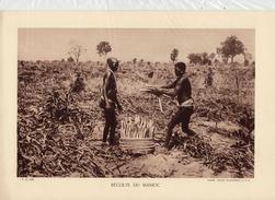 RECOLTE DU MANIOC, Animée,  Planche Densité = 200g, Format: 20 X 29 Cm, (Agence Economique A.F.F.) - Documents Historiques