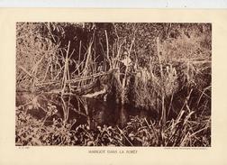 MARIGOT DANS LA FORÊT, Animée,  Planche Densité = 200g, Format: 20 X 29 Cm, (Agence Economique Togo-Cameroun) - Documents Historiques
