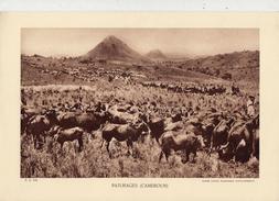 PÂTURAGES, CAMEROUN, Animée, Bétail,  Planche Densité = 200g, Format: 20 X 29 Cm, (Agence Economique Togo-Cameroun) - Documents Historiques