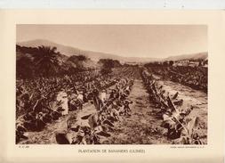 PLANTATION DE BANANIERS, GUINEE, Animée, Planche Densité = 200g, Format: 20 X 29 Cm, (Ag. Economique A.O.F.) - Historical Documents