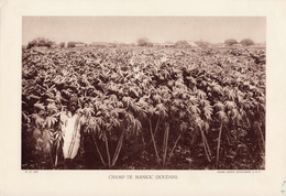 CHAMP DE MANIOC, SOUDAN, Animée, Planche Densité = 200g, Format: 20 X 29 Cm, (Ag. Economique A.O.F.) - Historical Documents