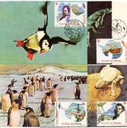 4 Cartes D'une Base De Roumanie  En Antarctique (thème Faune ) - Timbres