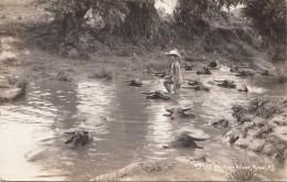 Philippines - Manilla - Carte-photo - Rizal - San Juan River - Femmes Bain Buffles Buffalos - Philippines