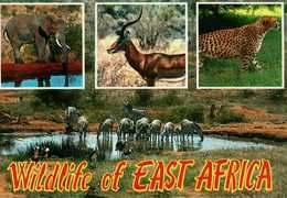 Kenia. Wildlife Of East Africa - Kenia