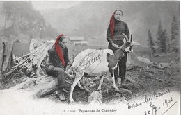 CHAMPÉRY → 2 Bäuerinnen In Tracht, Eine Melkt Eine Ziege Anno 1903 - VS Wallis