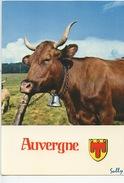 Auvergne : La Race Des Salers (n°0954 Combier) Blason  Sully (vache) - Auvergne