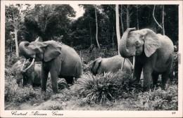 Ansichtskarte  Tiere - Elefant In Wildbahn  Afrika Kenia 1954 - Éléphants