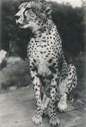 Le Guépard - Animals