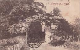 78 - FOURQUEUX / ENTREE DE LA FORET - LE CEDRE - France