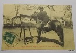 L'étalon Germinal Du Célèbre Docteur Rouhet écrivant Le Nom De Son Maitre - Horses