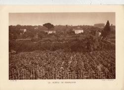 """PYRENEES ORIENTALES, LA """"HORTA"""" DE PERPIGNAN, Planche Densité = 200g, Format: 20 X 29 Cm, (A. Demongeon) - Documents Historiques"""