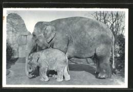 CPA Hamburg, Altona-Stellingen, Hagenbecks Tierpark, Mutter Roma Avec Baby August, Elefanten - Elephants