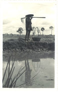 Cpa Carte-photo Cochinchine - Kha Qué ( Rizière ) - Viêt-Nam