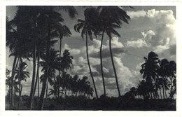 Cpa Carte-photo Cochinchine / Vietnam - Cocotiers - Viêt-Nam